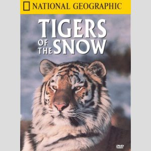 tigers-in-the-snow